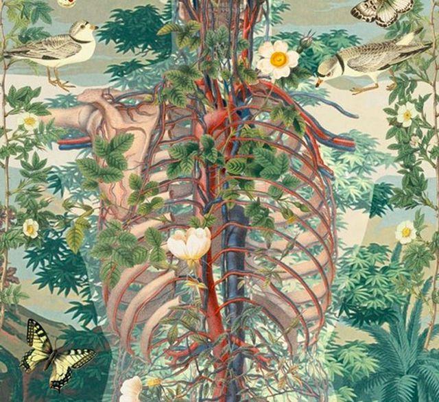 Экология потребления. Здоровье: Вытравить грибы из организма человека очень-очень сложно. Если грибок уже заселился, и, условно говоря, развил свою грибницу, то возникают достаточно сложные проблемы...