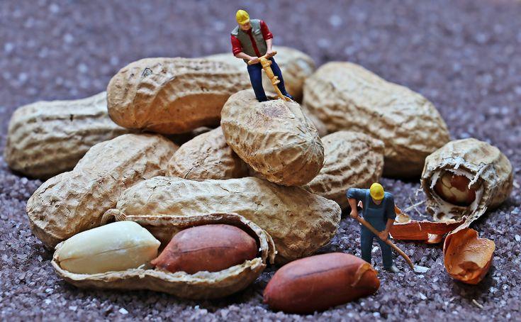 Was steht eigentlich in der LEAP Studie und was nicht? Allergien bei Kindern Am 23. Februar 2015 wurde in Houston bei der AAAAI Konferenz der Durchbruch bei der Erdnussallergie Prävention gefeiert. Das Füttern von Erdnüssen an kleine Kinder mit einem hohen Allergierisiko reduziert eine Erdnussallergie um sagenhafte 70-80 %. Dies ist das Ergebnis der LEAP Studie (Learning Early About Peanut Allergy), die von Dr. Gideon Lack, Professor am King's College London, vorgestellt wurde.