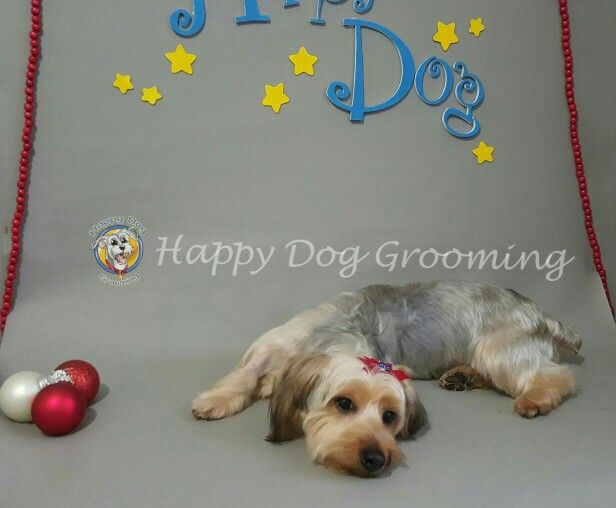 87 best images about Happy Dog Pet Grooming on Pinterest ... - photo#9
