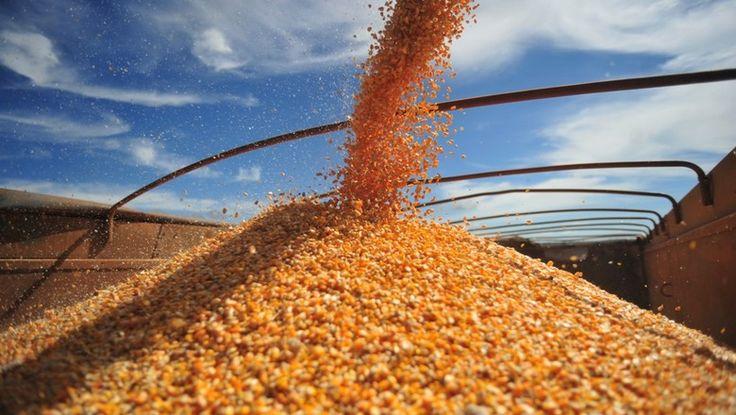 A Conab ofertou 148 mil toneladas que foram comercializadas por R$ 46,772 milhões, ao preço médio de R$ 22,28 por saca
