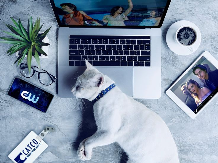 New devices? Your cat already has dibs. Get cozy with your furry friend and download The CW App to stream  your favorite shows for FREE: