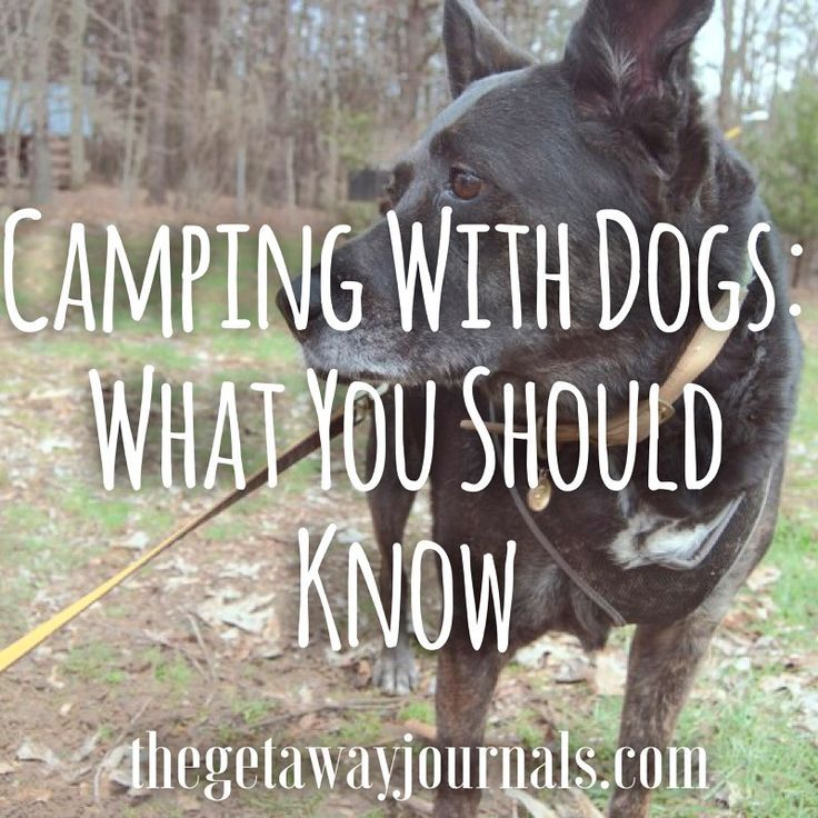 Thinking about taking your dog camping? Read these tips!