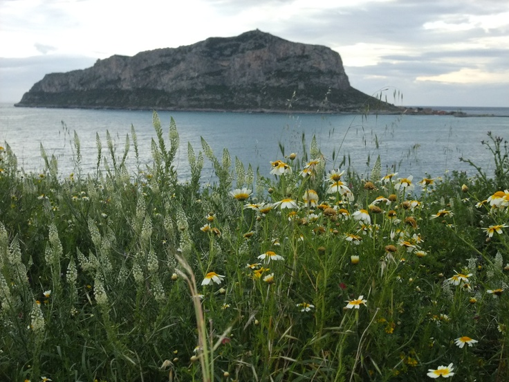 Lovely flowers with the rock of Monemvasia behind