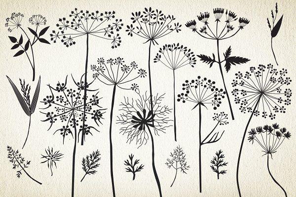 Botanical elements. More than 68! - Illustrations