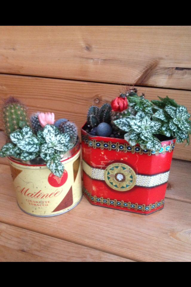 DIY VIntage tin Cactus Planters