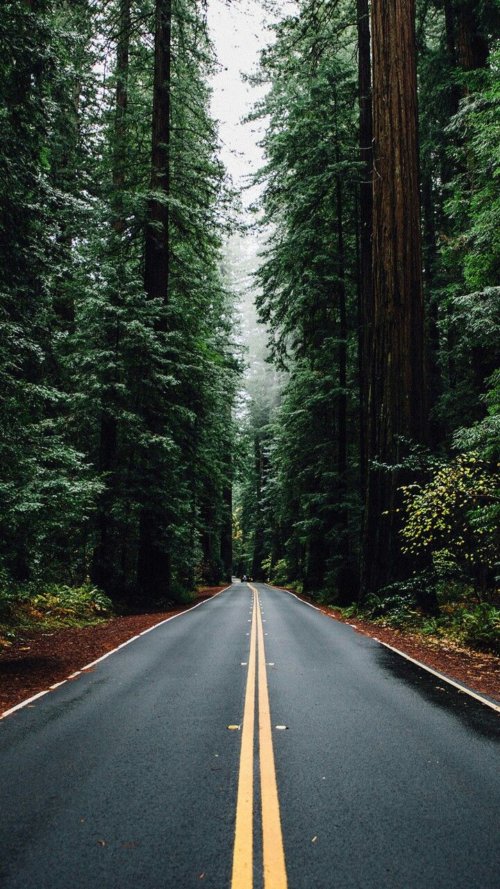 Fall Wallpapers For A Cell Phone The 25 Best Nature Iphone Wallpaper Ideas On Pinterest