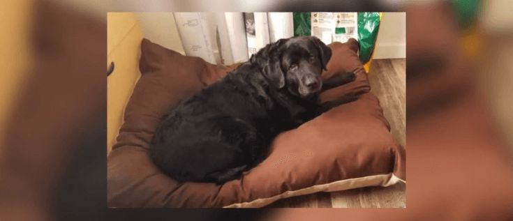 Dog inside of car stolen in denver found in kansas city