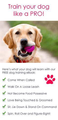 Puppy Training Tips. Find local dog trainers at [EducatorHub.com]