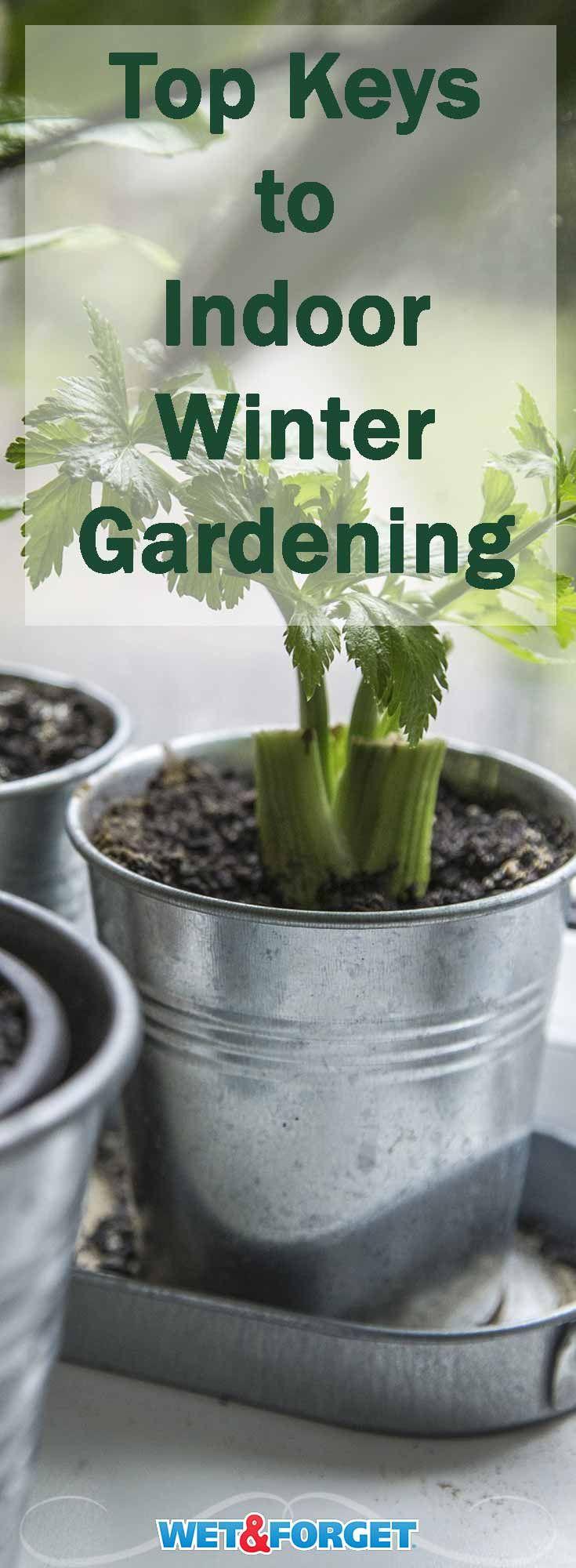 694 best Indoor Herb Gardening images on Pinterest