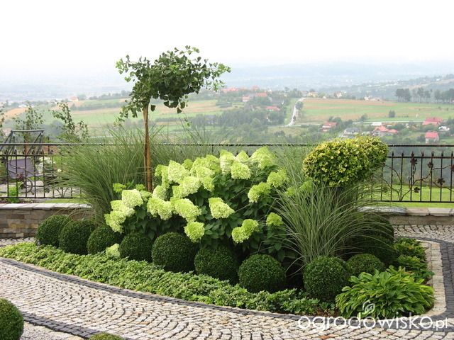 Ogród wśród pól i wiatrów - strona 381 - Forum ogrodnicze - Ogrodowisko