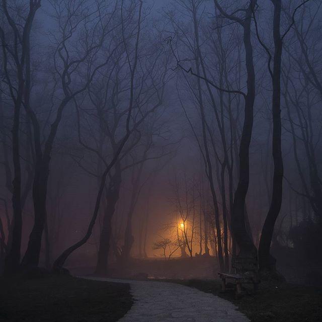 #GreatShotz #Jaw_Dropping_Shots #Hot_Shotz  #Global_HotShotz #Big_Shotz #Fantastic_Shotzs  #OurPlanetDaily #Instamood #beautifuldestinations #Splendid_Shotz #AwesomeEarth #Fantastic_Earth  #awesome_earthpix #earthpix #tv_foggy #foggy #landscape #naousa #trees #forest#rsa_fog