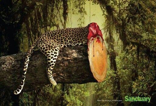 """Социальная реклама """"Когда исчезают леса, исчезает и жизнь""""."""