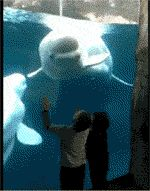 Whale Scares Two Little Kids - Another case of animals doing more than we expect.  This Beluga has discovered that by mimicking threat displays, he can get the kids to jump back.  He's entertained by their antics as much as they are by him.
