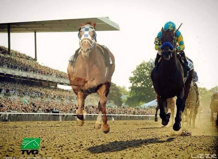 The ghost of Secretariat running with his great-great-great grandson, American Pharoah as AP wins the 2015 Breeders Cup Classic!