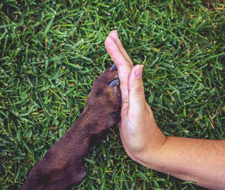 7 Simple Ways to Help Out at Your Local Pet Shelter
