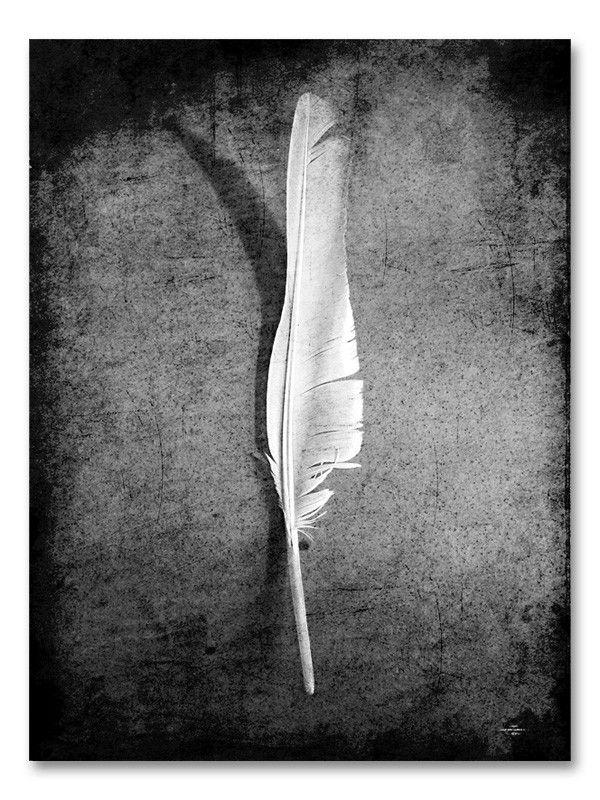 Feather - Caro-lines #nordicdesigncollective #carolines #feather #feathers #poster #swedishdesigner #swedishdesign