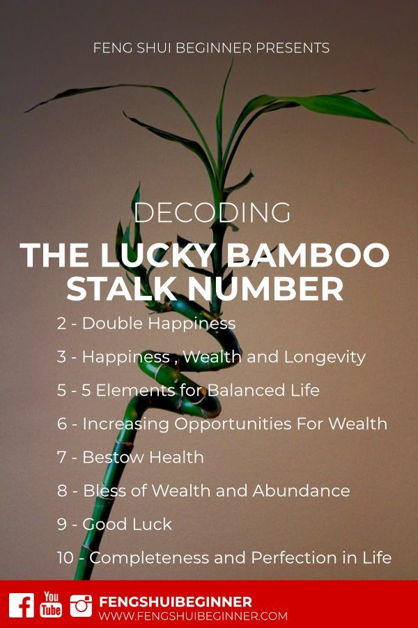 Deciphering Meaning Of Lucky Bamboo Stalks Numbers How To Feng Shui Your Home Feng Shui Decor Feng Shui Tips
