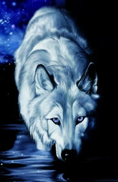 wolf art                                                                                                                                                     More
