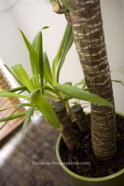 best 25 yucca plant ideas on pinterest desert