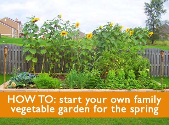 5 Tips On How To Start A Family Vegetable Garden This