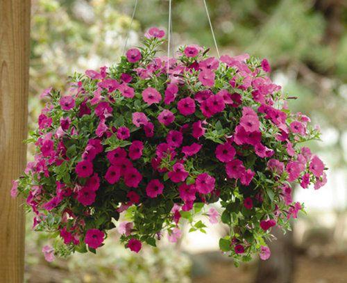 Dicas: flores que resistem ao sol | Lu Landim