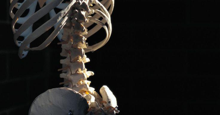 O que é um paraplégico T8. Uma lesão na medula espinal (LME) é aquela que causa perda de mobilidade e sensação. A maioria dessas lesões se deve a acidentes ou doenças, como a espinha bífida ou tumores. O paraplégico T8 é o indivíduo que tem um LME na oitava vértebra torácica.