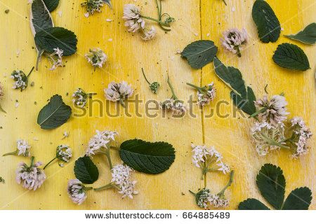 Flowers on vintage yellow wooden board. Floral background.