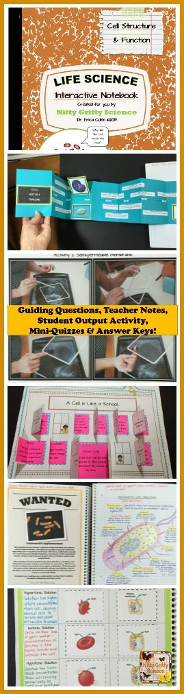Life Science Interactive Notebooks: Cell Structure and Function feature original and engaging student output activities, mini-quizzes and answer keys!