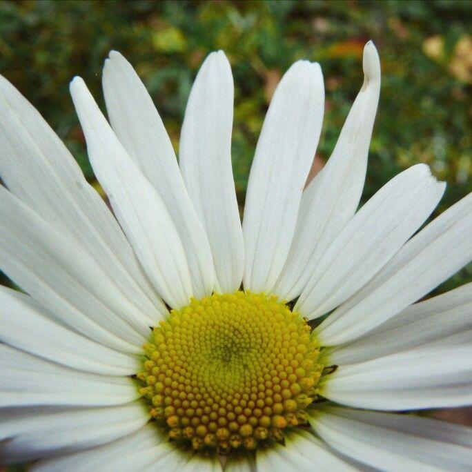 Happy Earth Day   #pureromania