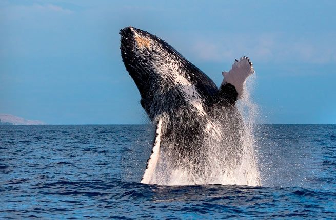Whale-watching - The Turks and Caicos Islands' Top 14 Experiences | Fodor's Travel