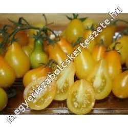 Lycopersicon 'Red + Yellow Pear' - Paradicsom