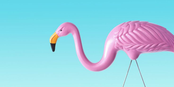 Pink Flamingos Lawn Ornaments - Things You Didn't Know About Plastic Flamingos