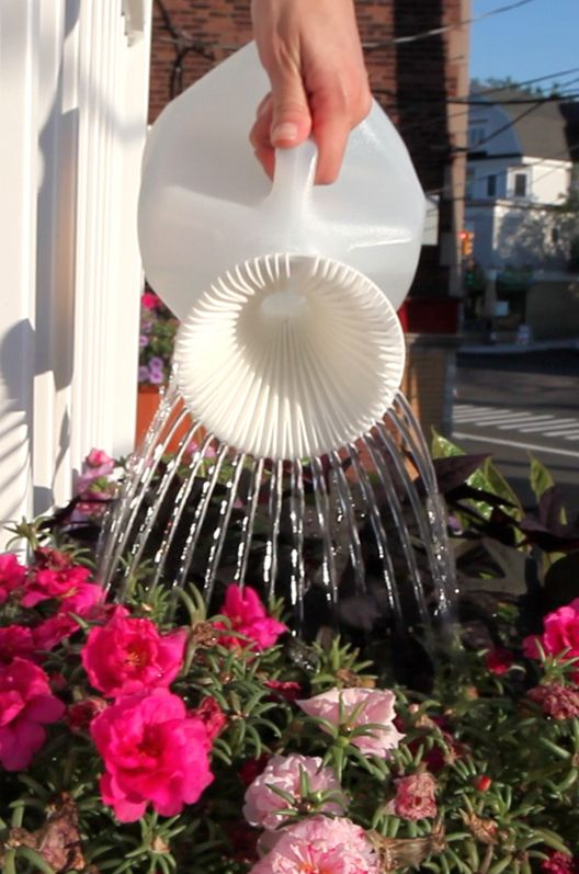 turn your empty milk carton into a watering can