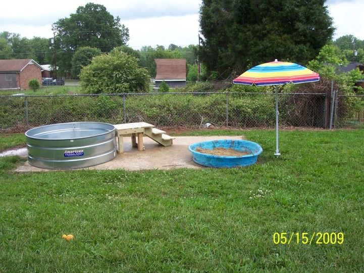 Dog playground ideas dogs pinterest pools doggie for Garden pool for dogs