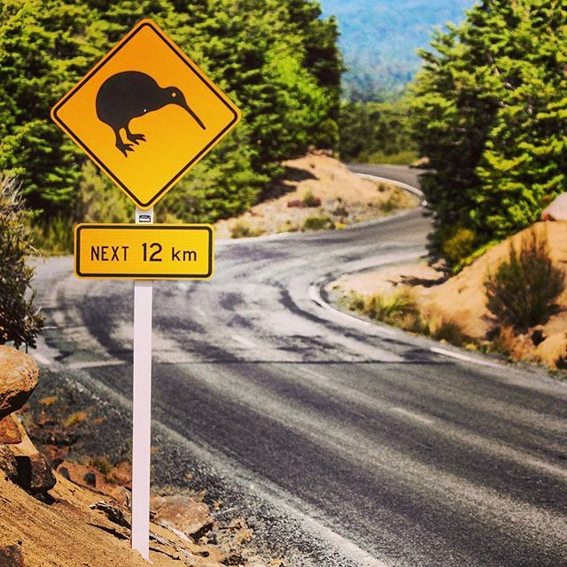Kiwis ahead!! One of my favourite road signs to see on the road. How many of you have been lucky enough to spot a kiwi? #capturenz #newzealand #kiwi