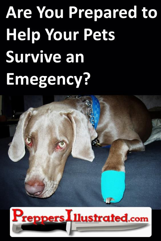 Don't just prepare for your family.  Check out this article to see if you're prepared to take care of your pet in an emergency: http://preppersillustrated.com/2416/prepared-help-pets-survive-emergency/ #Survival, #Prepping
