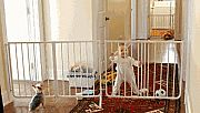 Cardinal Gates, (EX-5P), Extendable Pet and Child Safety Gate