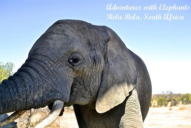 A Home Away From Home: {Adventures With Elephants}