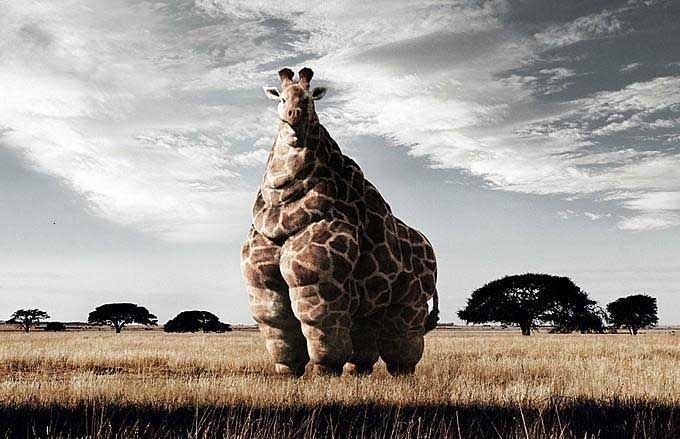 Top ten fattest animals around the world. Description from wn.com. I searched for this on bing.com/images