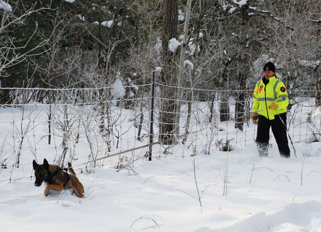 Search And Rescue Dogs Training And Becoming A Search And Rescue