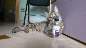 Hola a todos, estoy participando en un concurso con mi gatita. ¿Me podéis ayudar? es sólo un click.  Gracias Desde que uso feliway Iris se siente más cómoda y tranquila , ya que es una gatita recogida de la calle que tenía miedo de todo.  Ahora es más feliz, se la ve muy tranquila y muy a gusto.  Y yo súper feliz de verla así de bien .