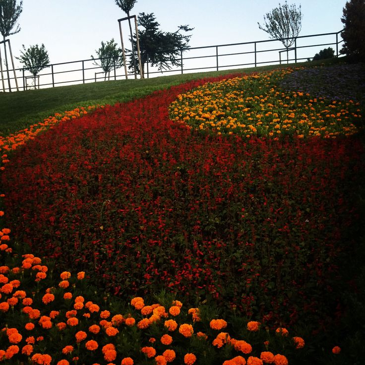 Just an ordinary park by a bus stop in Pendik, Istanbul, by Christopher Webb