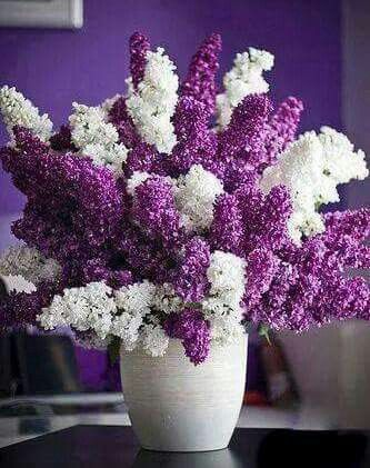 110 best liliacs my favorite flower images on pinterest lilac blanco y violeta mightylinksfo