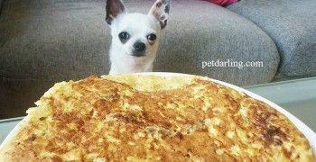 Comida casera para perros Tortilla de higado y romero Receta fácil!