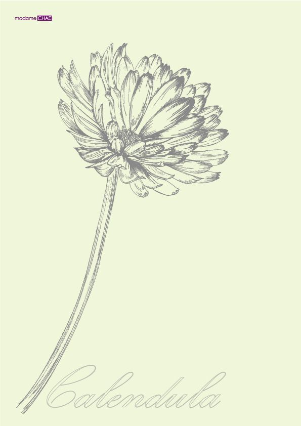 Calendula officinalis by JUNG SOO CHAE, via Behance