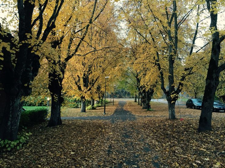 Autumn in all it's glory :)
