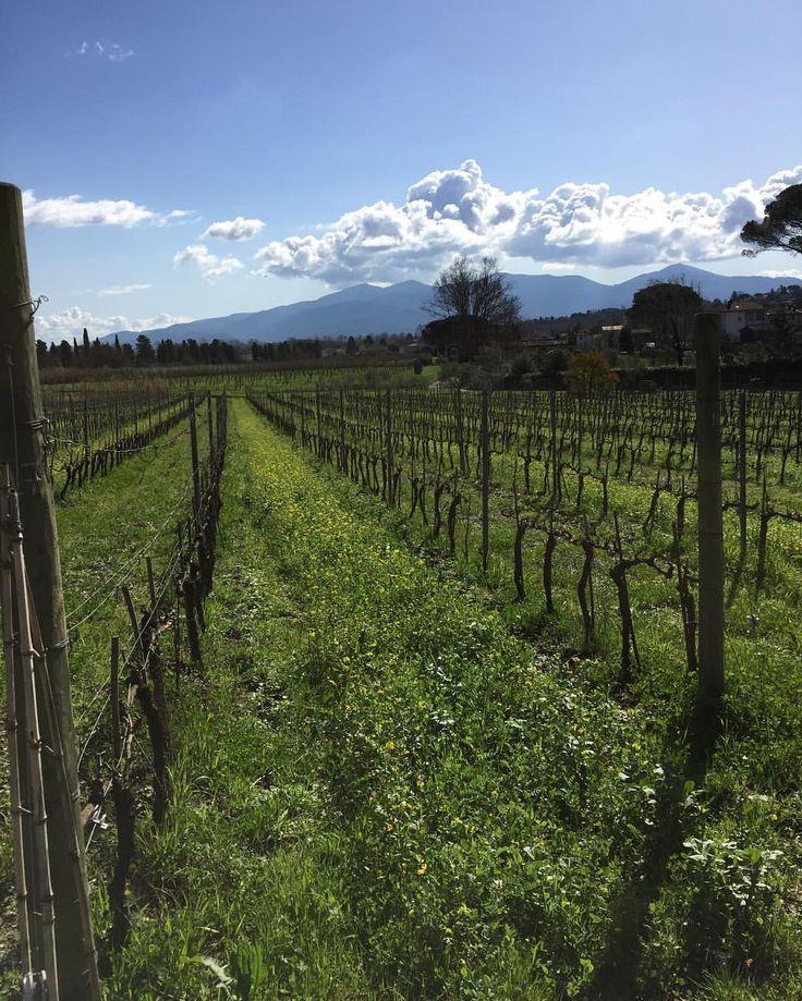 Sunny day #nofilter @fattoriasardi #organic #wines #vineyards #bio #biodynamic #luccabiodinamica #vigne #collinelucchesi #lucca #toscana #spring #primavera