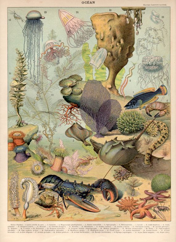 1897 Underwater Seascape Antique Print Lithograph by Craftissimo