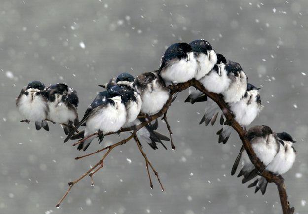 Snow babies! http://s3-ec.buzzfed.com/static/enhanced/web04/2012/5/8/12/enhanced-buzz-31217-1336495947-1.jpg