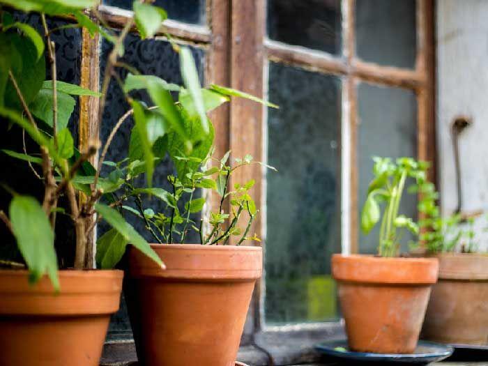 SUS disponibiliza curso grátis e online de plantas medicinais e fitoterápicos  + Acesse: www.canaldoensino.com #educacao #ensino